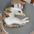 ばばのぼるの猫