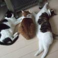 猫の適正サイズ